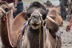 ladakh-tour-package-38