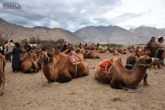 ladakh-tour-package-40