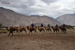 ladakh-tour-package-41