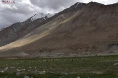 ladakh-tour-package-59